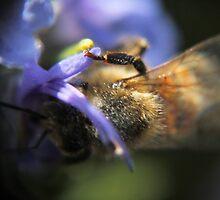 Hide and seek bee by PeterWhy