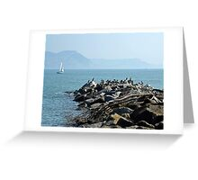 Cormorants View ..... Greeting Card