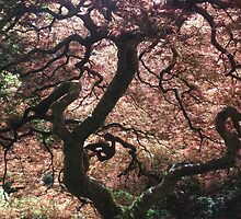Japanese Maple by audreywalker