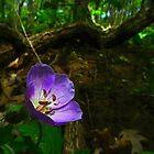 Purple by BonnieToll