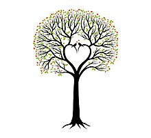 Love tree with heart shaped branches and birds Photographic Print