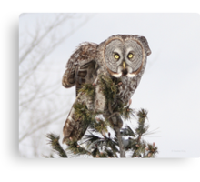 The perching prince Canvas Print