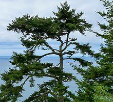 Tree at the Coast by SusanHamilton