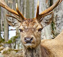 Check out my rack by Heather King