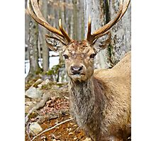 Check out my rack Photographic Print