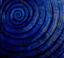 Sapphire Ammonite by Kellie Williams