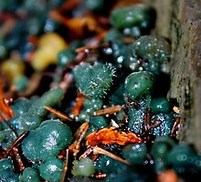 Turquoise Jelly Baby Fungus With Fuzz by Kathleen Daley