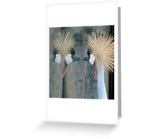 Mirror, mirror, tell me who.... Greeting Card