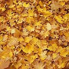 Fallen autumn leaves by VallaV