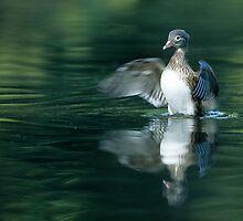 Duck Landing by Kasia Nowak