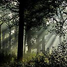 Isle Adam forest in the morning by Rémi Bridot