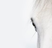 White Horse at dawn by Andrew Bret Wallis