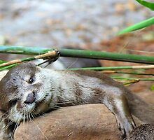Otter  by SoftHope
