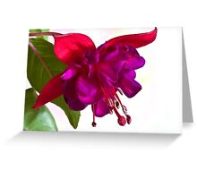 Fuschia Blossom Macro  Greeting Card