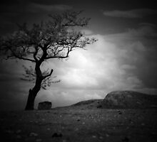 The Tree at Dog Rocks by soulexposure