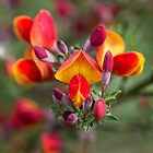 Pretty Orange and Yellow Flowers by Pixie Copley LRPS