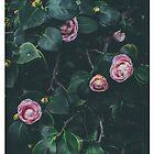 Camellias by Miyuki Mardon