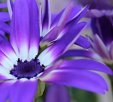 Pretty in Purple by Kume Bryant