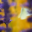 Impressionism butterfly by Jeannine St-Amour