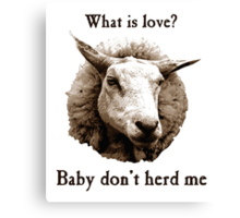 Baby Don't Herd Me Sheep Canvas Print