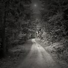 THIS BEAUTIFUL PATH by leonie7