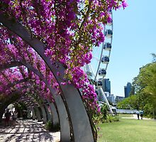 The Arbour, South Bank by PhotosByG