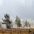 18.9.2014: Pine Trees, Autumn Morning by Petri Volanen