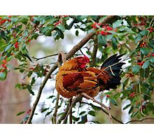 Rooster In A Tree Photographic Print