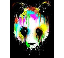 Panda. Photographic Print