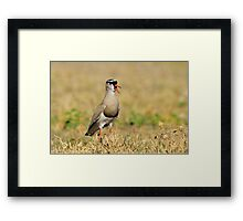Plover Talk - Funny Nature and Entertaining Wildlife Framed Print