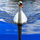 Blue water swan by Mortimer123