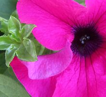 PRETTY PINK PETUNIA by Colleen2012