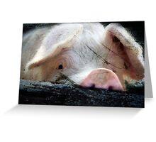 Peeking Pig Greeting Card