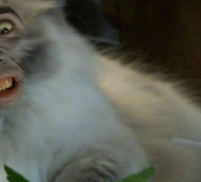 Nic Cage Cat Sticker