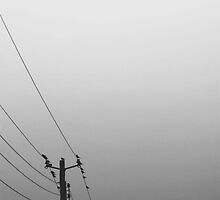 Quiet Day on the Wire by jbrookephotos