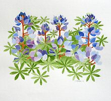Wild Lupin by Stephen Borges