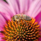 Bee 11 by Mark Bangert