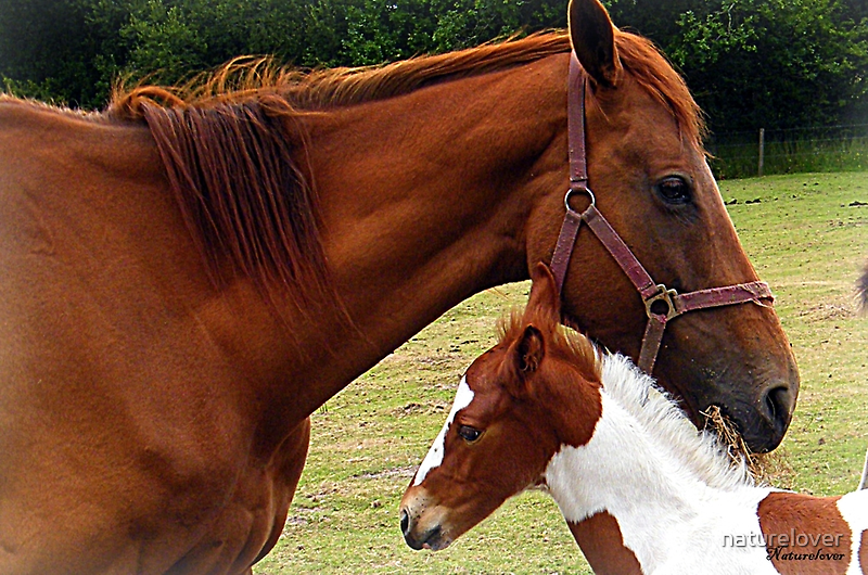 Mother and Foal by naturelover