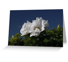 White Wild Rose Greeting Card