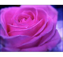 VIVID PINK ROSE Photographic Print