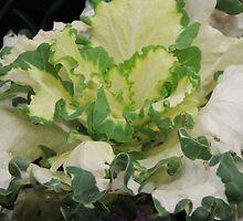Minstrel Cabbage by ScenerybyDesign