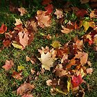 Autumn carpet by Bluesrose