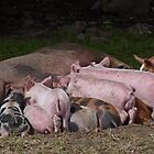 Lunchtime for Piggies by Kat Simmons