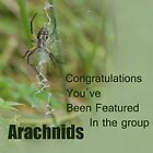 New Challenge for Arachnids! by Carla Wick/Jandelle Petters