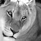 Lovely Lioness by HaleyRenee