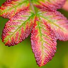 Autumn Rose Hip Leaves by M.S. Photography & Art