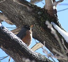 Bird on a Branch by DevinStar
