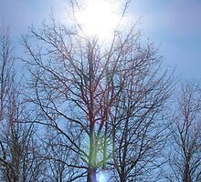 A Crown of Sun for a Tree by DevinStar