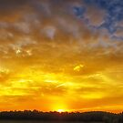 Great Meadows Sunset of Gold by Owed to Nature