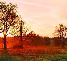DEER AT SUNSET by Chuck Wickham